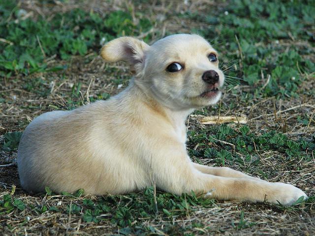 Addestrare il cane - Eliminare odore pipi cane giardino ...