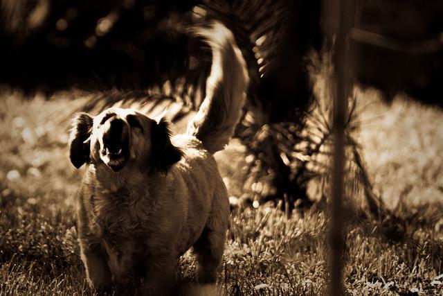 Se il cane abbaia troppo e spesso for Cane che abbaia