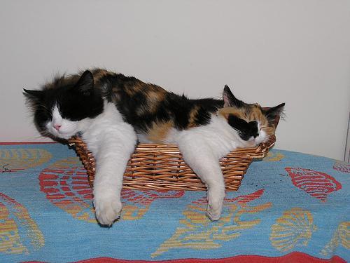 Cani e gatti cucce fai da te - Cuccia per gatti da esterno fai da te ...