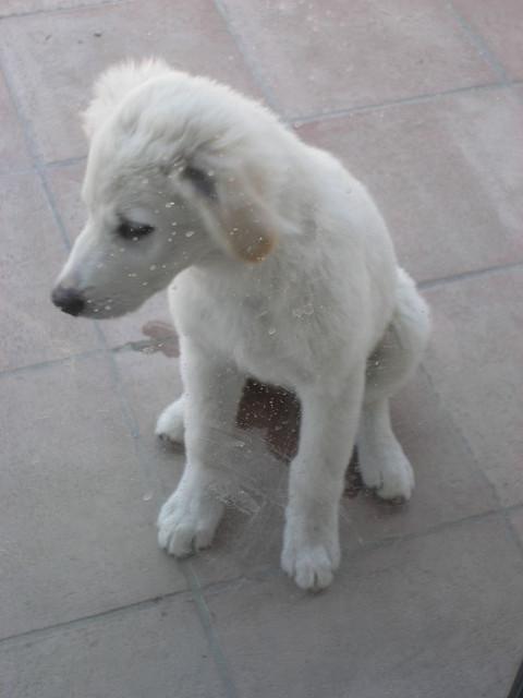 Il cane fa pip e pup in casa le cause - Cane pipi letto ...