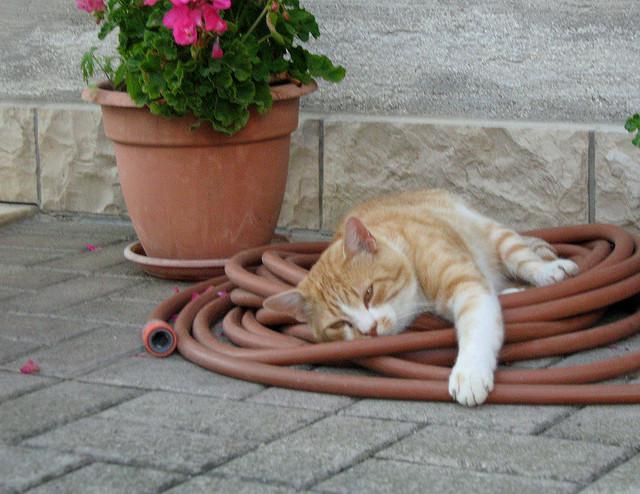 Piante e fiori tossici per i gatti for Piante velenose per i gatti