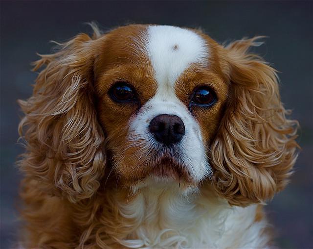 Perch il cane lecca il muso di un altro cane - Quando fare il primo bagno al cane ...