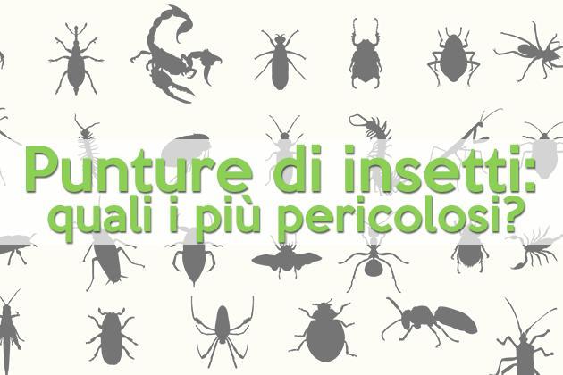 Punture di insetti quali i pi pericolosi allergia e for Punture pulci